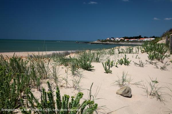 Plantes sur les dunes des plages