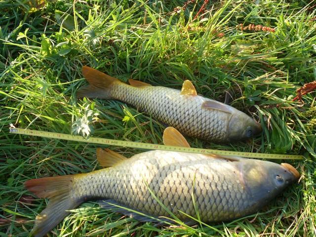Gîte de pêche en vendée pour les carpistes