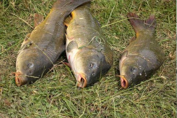 Gîte de pêche poissonneux en vendée